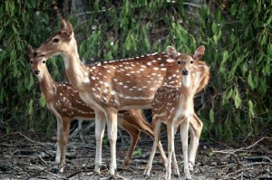 Sundarbans National Park travel guide