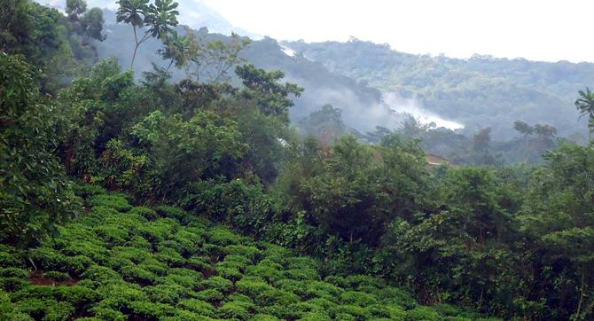 Bwindi forest reserve