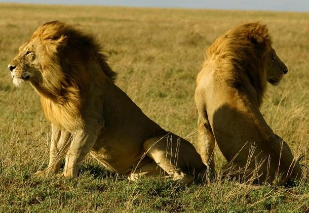 Gir National Park In Gujarat