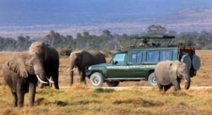 Kenya Elephants Safari
