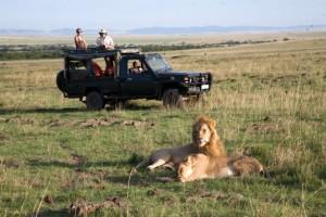 Kenya Wild Life Safari