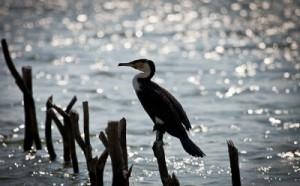 Species Bird at iSimangaliso Wetland Park